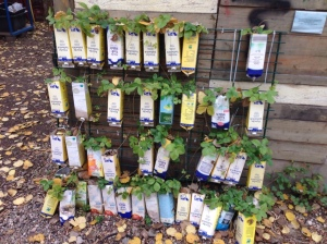 Pflanzen in Milchtüten