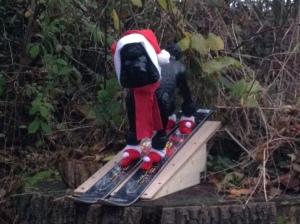 Hund auf Skiern